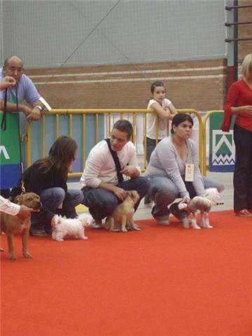 HEIDI DE ELDACAN (PROPIETARIA SONIA), 4-10-09  hasparren (francia) muy prometedor, mejor cachorro.