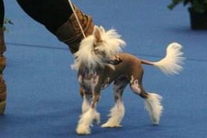 HEIDI DE ELDACAN (PROPIETARIA SONIA), 20-9-09 exposicion  de bilbao, MB2º en clase cachorros