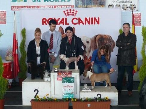 HEIDI DE ELDACAN,(PROPIETARIA SONIA)  concurso del ayuntamiento de Suances, realizado por la canina montañesa y la RSCE, el dia 20 de diciembre del 2009, MB1º mejor de raza, mejor cachorro del grupo 9 y BIS clase cachorros.